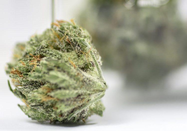 Cannabis_Cannabinoides